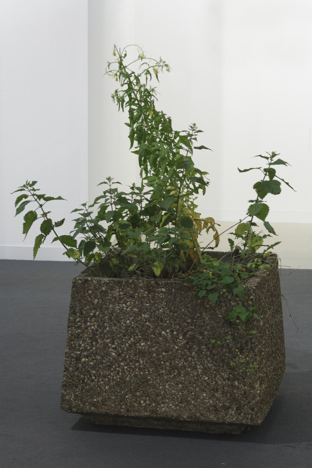Manfred Pernice   Untitled, 2009  Cement, earth, plant,  60 × 80 × 80cm (without plants)
